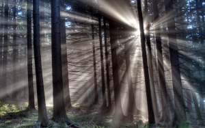 Morning-Sun-Rays-Forest