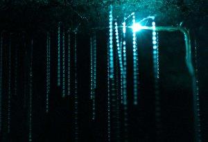 spellbound-glowworm-threads